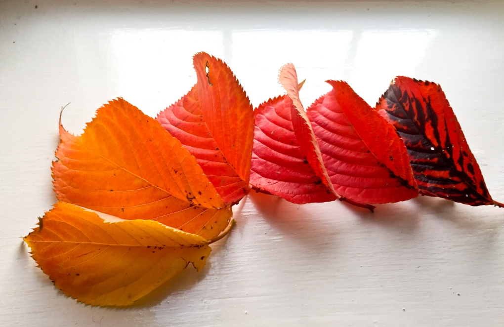 Autumn leaves arranged on a windowsill